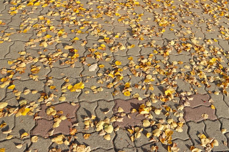 Fallen autumn leaves of yellow color on the stone paving slabs. Paved sidewalk for pedestrians. Fallen autumn leaves of yellow color on the stone paving slabs stock photos