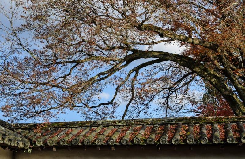 Fallen autumn maple leaves on roof. Fallen autumn maple leaves on Japanese temple roof in Kyoto, Japan stock photo