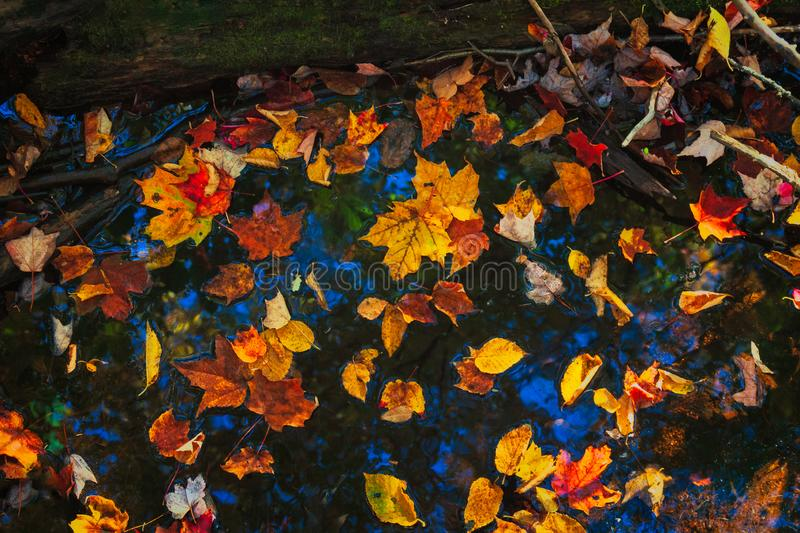 Fall leaves on water stock photography