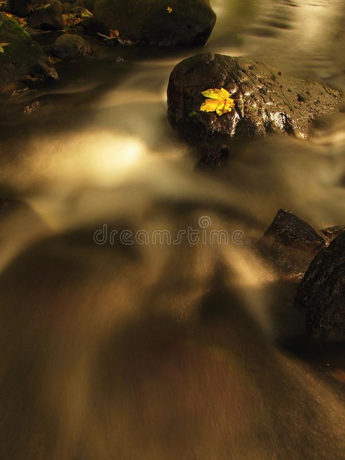 Fallen broken yellow maple leaf in stream. Autumn castaway on wet slipper stone in cold blurred water. Of mountain river royalty free stock photos