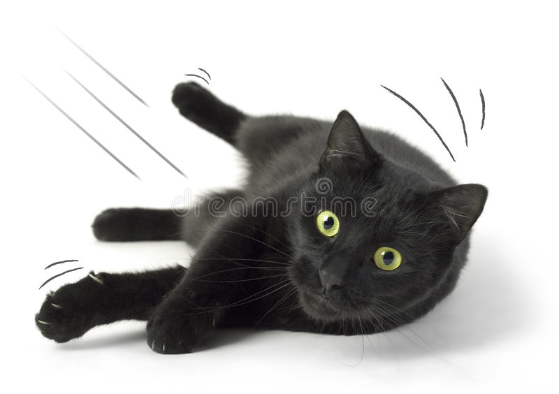 Download Fallen Cat stock image. Image of attack, adversity, friendship - 6937045