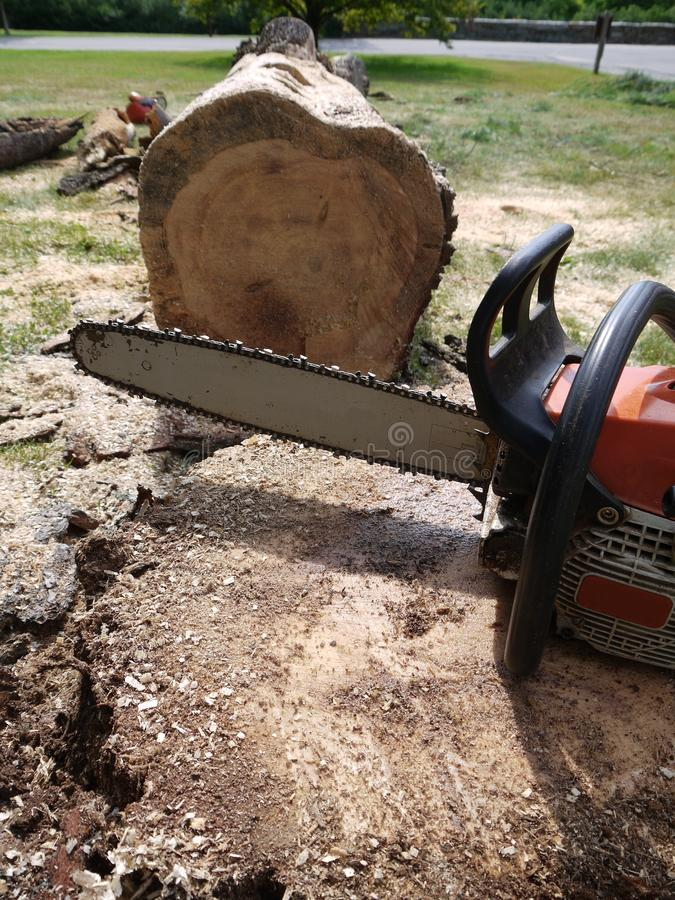 fallen chainsaw avverka treen fotografering för bildbyråer