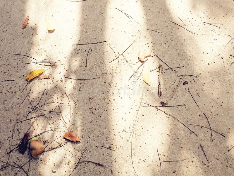 Shades of the tree on grunge concrete royalty free stock image