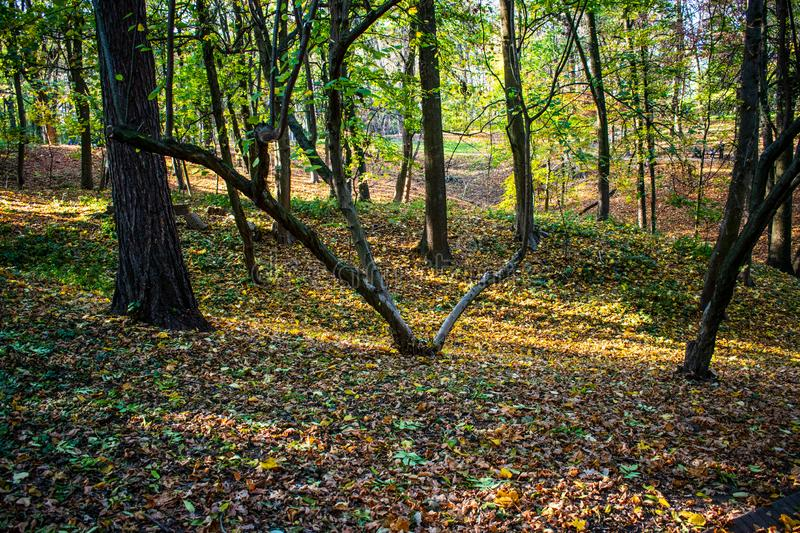 Fallen dry autumn leaves in city park. Nature in the city royalty free stock photography