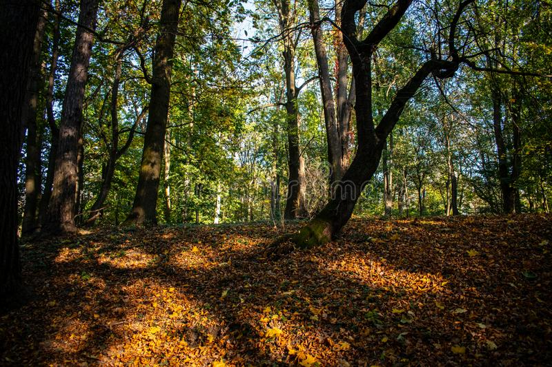 Fallen dry autumn leaves in city park. Nature in the city royalty free stock photo