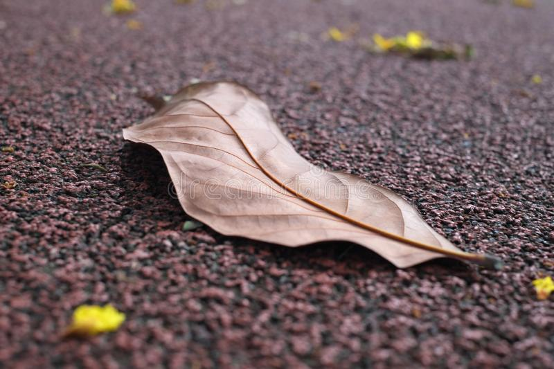 Fallen dry leaf on running track royalty free stock images