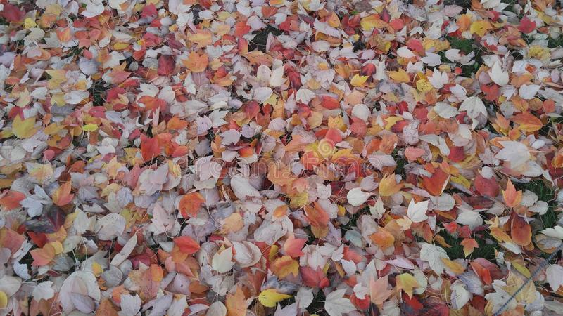Fallen Fall leaves royalty free stock photo