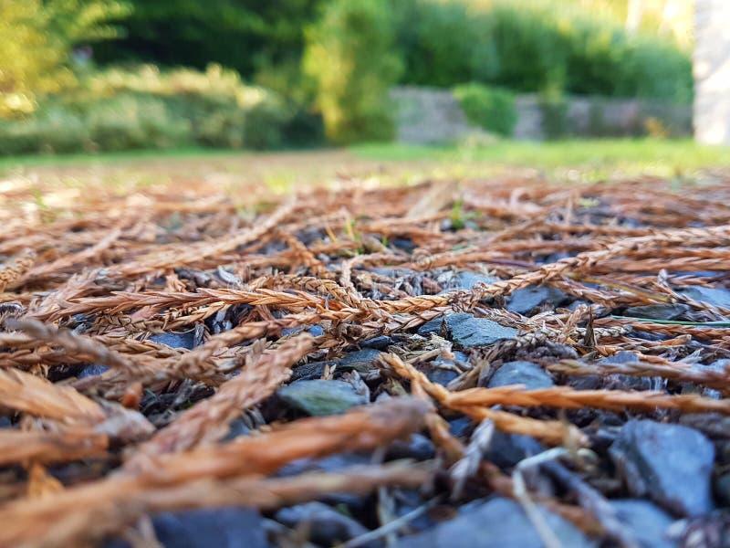 Fallen Ferns stock image