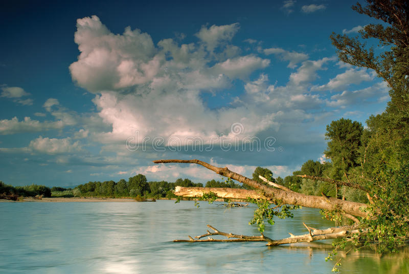 fallen flodtree arkivbilder