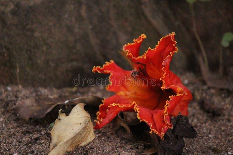 A fallen flower royalty free stock image