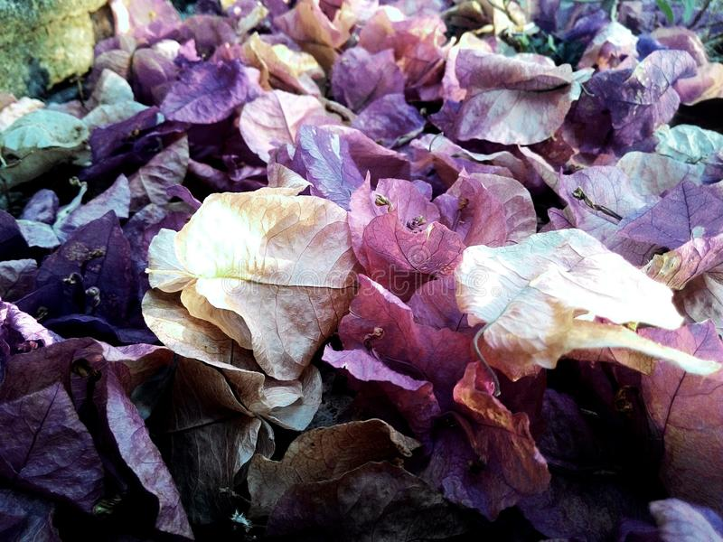 Fallen Flowers royalty free stock image