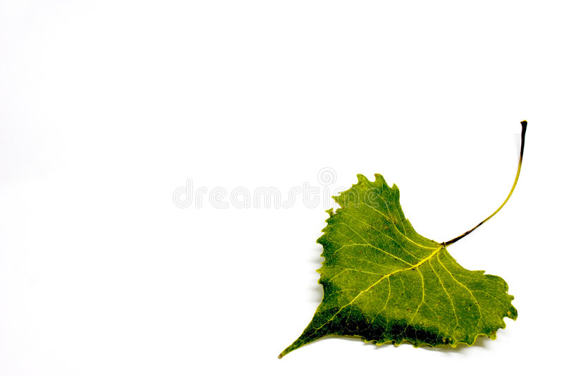 Fallen Green Leaf royalty free stock image