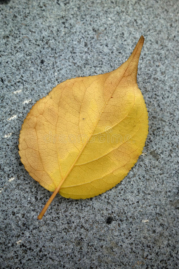 Download A fallen leaf stock photo. Image of close, ecology, agriculture - 33601064
