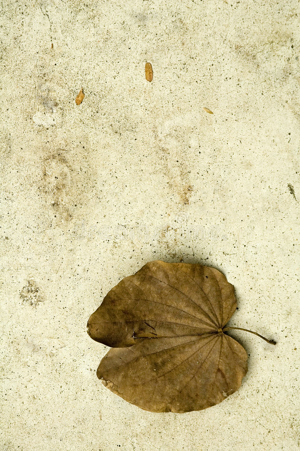 fallen leave arkivbild