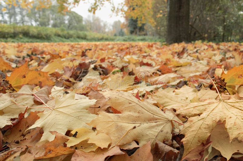 Download Fallen Leaves Royalty Free Stock Image - Image: 1413166