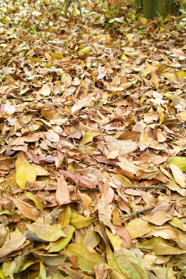 Download Fallen Leaves Royalty Free Stock Images - Image: 24645079