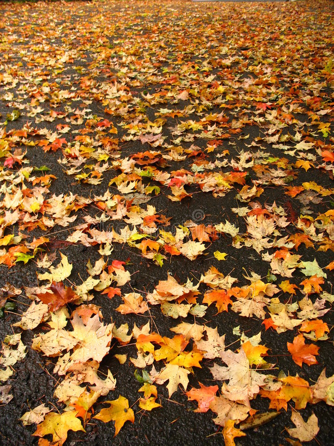 Free Fallen Leaves Royalty Free Stock Photos - 2554878