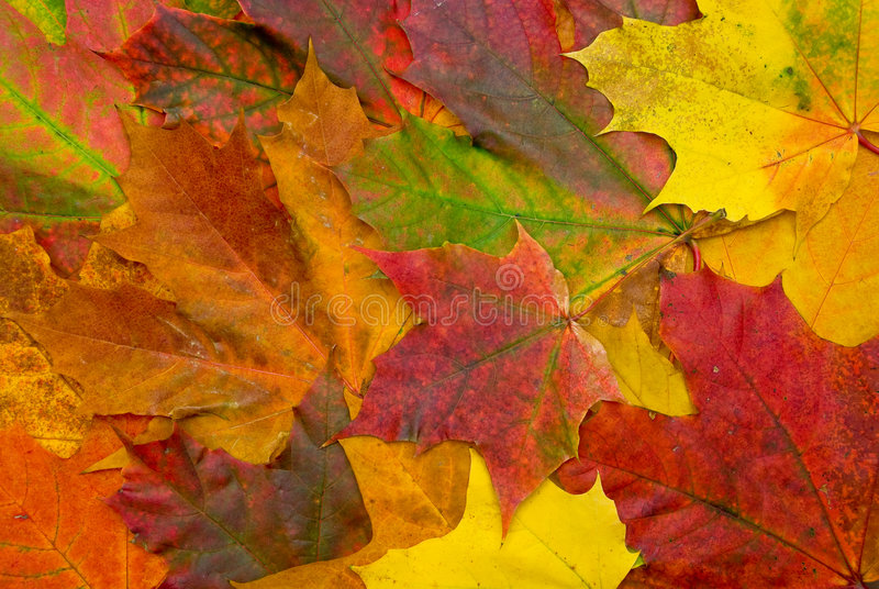 Download Fallen leaves stock image. Image of design, backgrounds - 3607543