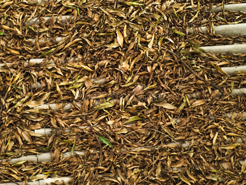 Fallen leaves and branches on roof tiles royalty free stock image