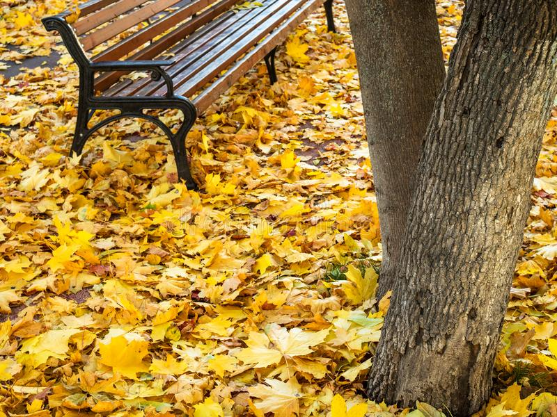 Fallen leaves cover a pathway near empty bench. Yellow fallen leaves cover a pathway near empty bench in urban park in autumn day stock photos