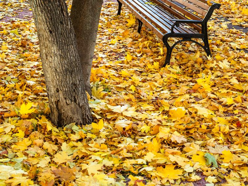 Fallen leaves cover a road near empty bench. Yellow fallen leaves cover a road near empty bench in urban garden in autumn day royalty free stock photo