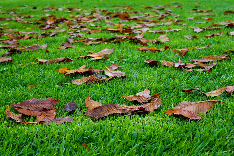 Fallen leaves royalty free stock photos