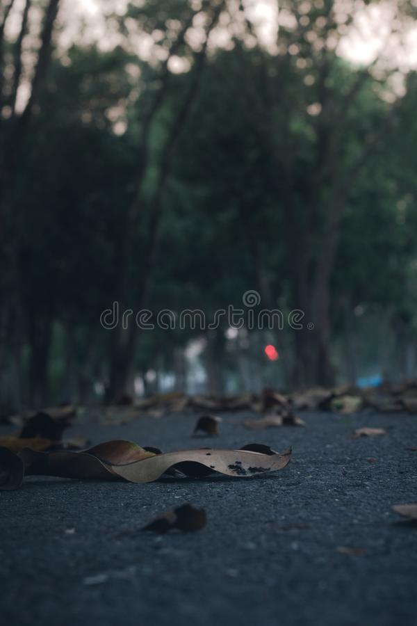 Fallen leaves on the floor. With selective focus royalty free stock photography