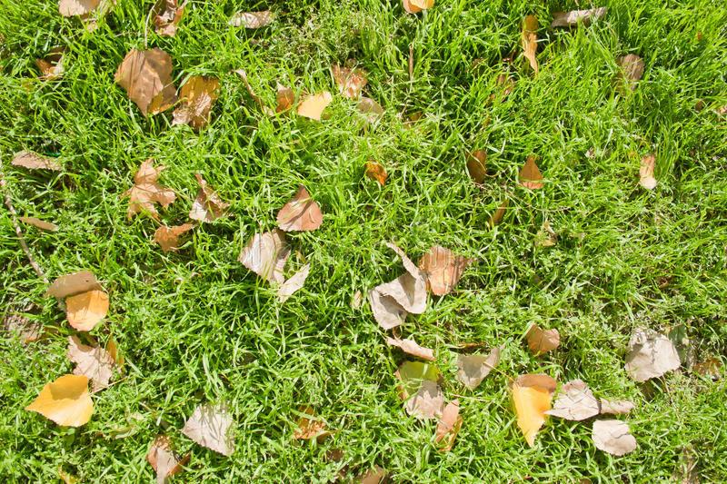 Fallen leaves on grass stock images