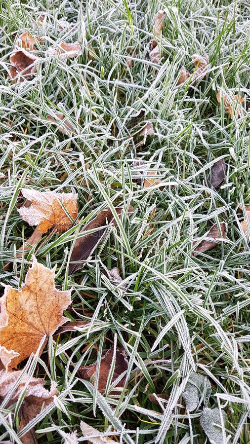 Fallen leaves on green grass with white frost, abstract natural background. Frozen foliage on the ground. First frost. . Freezing royalty free stock images