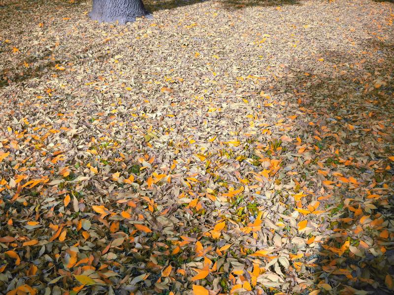 Warm shorter days and longer shadows. Fallen leaves on ground, in sunlight and shadow, in tones of orange, yellow, and grey, partly oversaturated and partly royalty free stock images