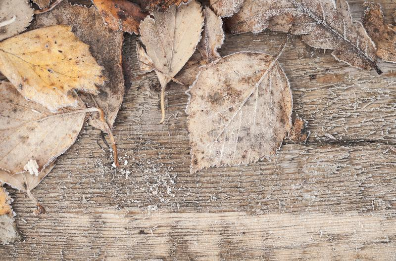 Fallen leaves with hoarfrost on wooden desk stock images