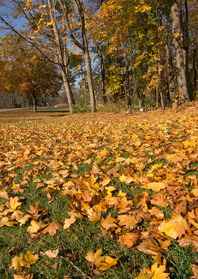 The Fallen. Leaves of late fall lie scattered in the lawn of a midwestern park stock photography