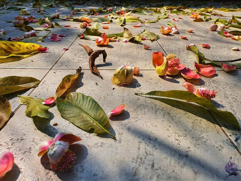 Fallen leaves on the marble floor in the sunlight stock images