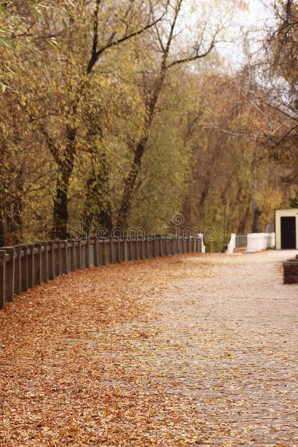 Fallen leaves on the path in the park stock photo