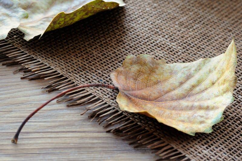 Fallen Leaves of Poplar Tree stock photo