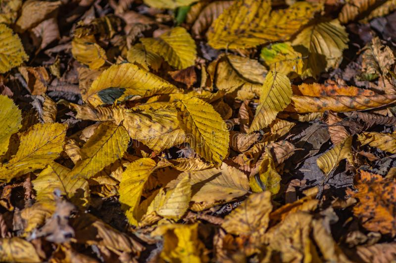 Fallen leaves on the road. In autumn afternoon stock photo
