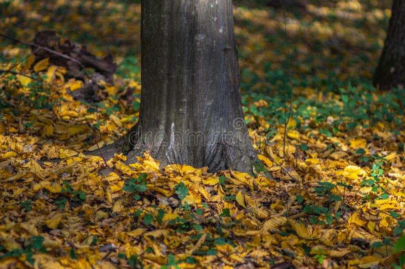 Fallen leaves on the road. In autumn afternoon royalty free stock photos
