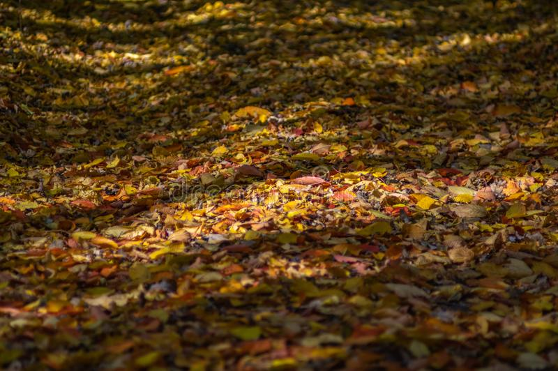 Fallen leaves on the road. In autumn afternoon stock images
