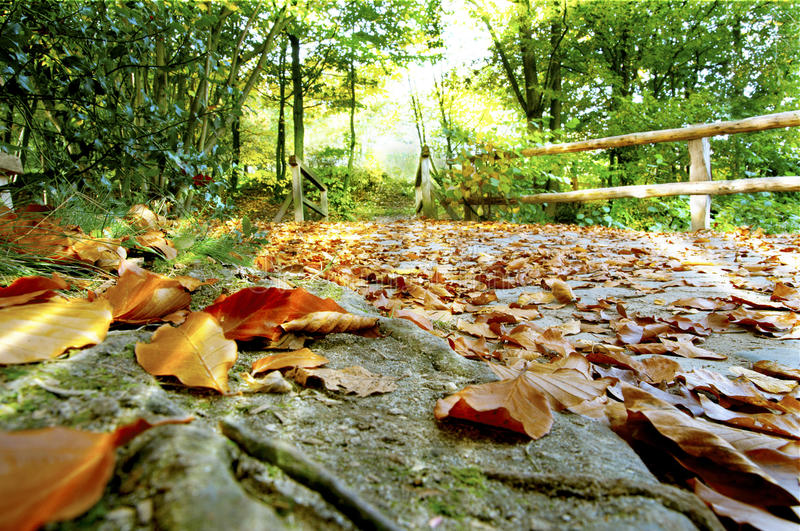 Download Fallen leaves and sun rays stock photo. Image of bright - 28476332