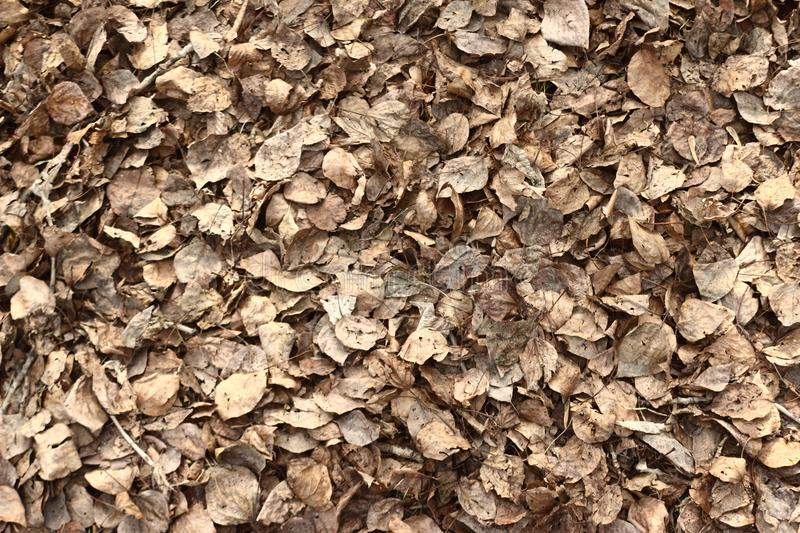 Fallen leaves texture royalty free stock image