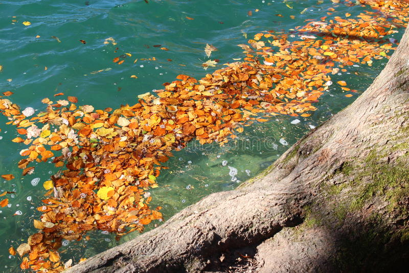 Fallen leaves in a very blue lake. Autumn at the lake Wolfgangsee, Austria, Europe royalty free stock photos