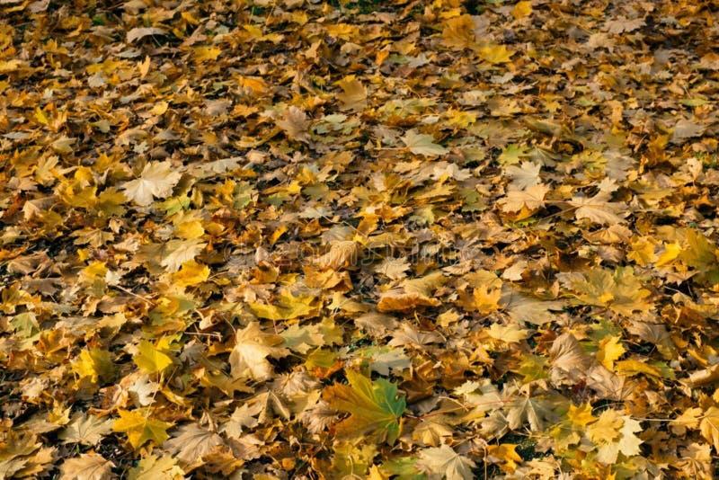 Fallen Leaves Free Public Domain Cc0 Image
