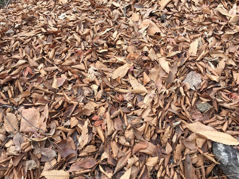 Fallen leaves in Winter royalty free stock photos