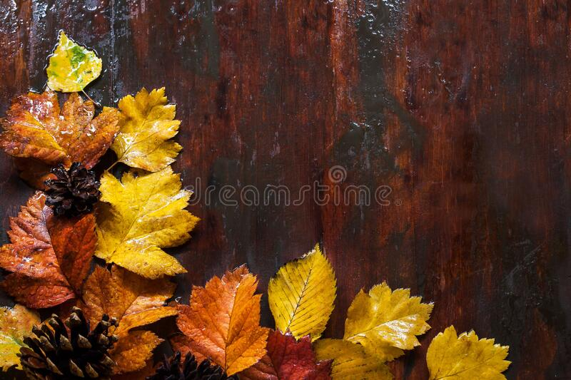 Fallen leaves on wooden background, top view stock photography
