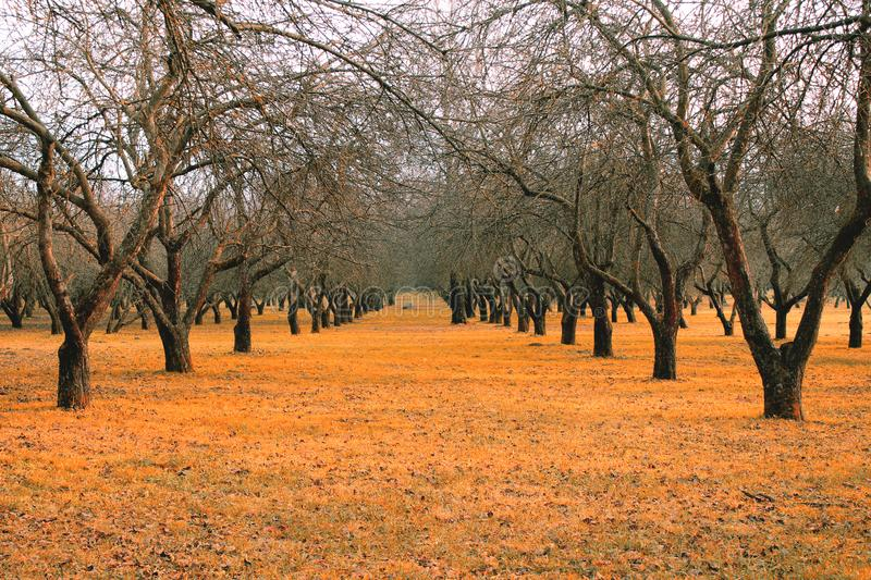 Fallen leaves yellow golden tree alley in the park season fall autumn background  nature stock photos