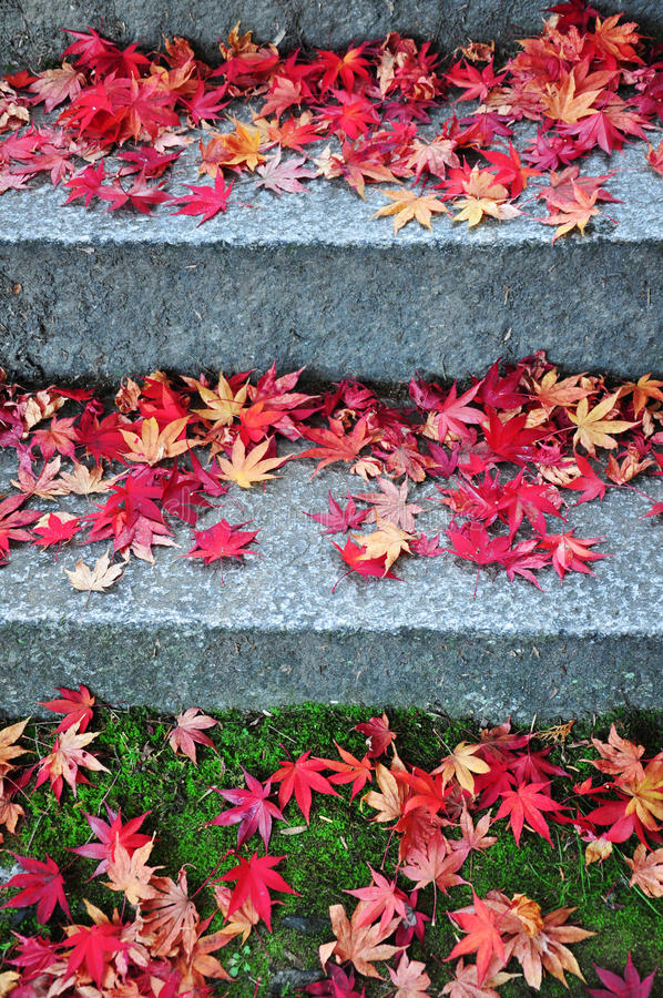 Free Fallen Maple Leaves On The Stairs Way Royalty Free Stock Photography - 64978197