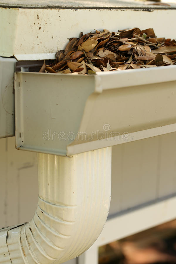 Fallen oak leaves clogging the downspout. Neglected gutter and downspout clogged with rotting oak leaves stock photos
