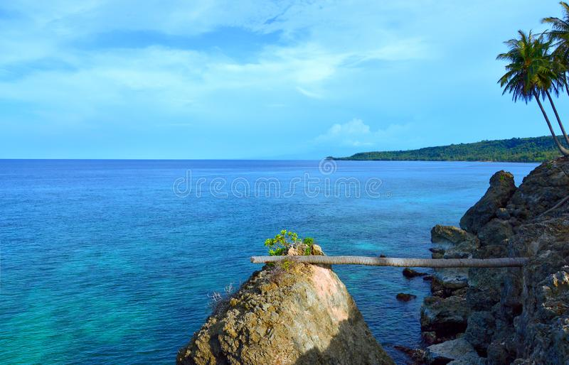 Fallen palm tree makes a bridge in Pulau Weh, Indonesia. royalty free stock photos