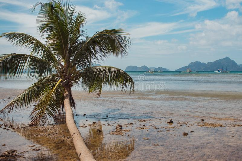 Fallen palm tree on seashore during low tide. Philippines, island Palawan, El Nido beach. Tropical vacation and tourism. Fallen palm tree on seashore during low royalty free stock photography