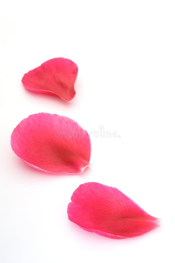 Download Fallen petals stock image. Image of falling, pretty, confetti - 1270153